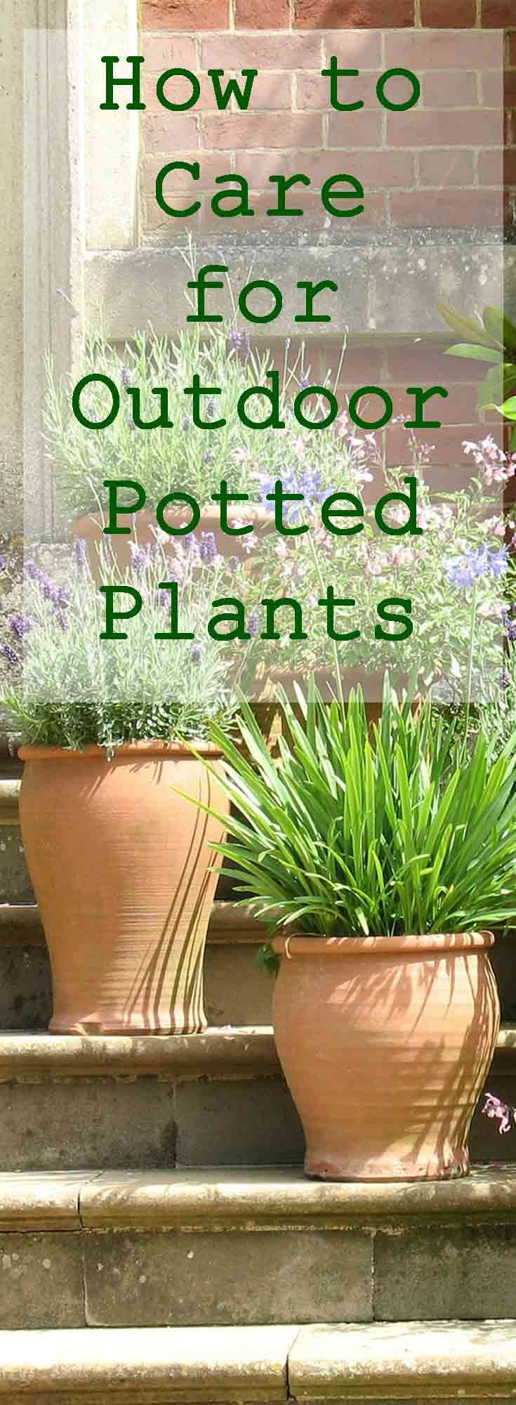 Keep your outdoor potted plants in top shape as the seasons change with this easy guide!