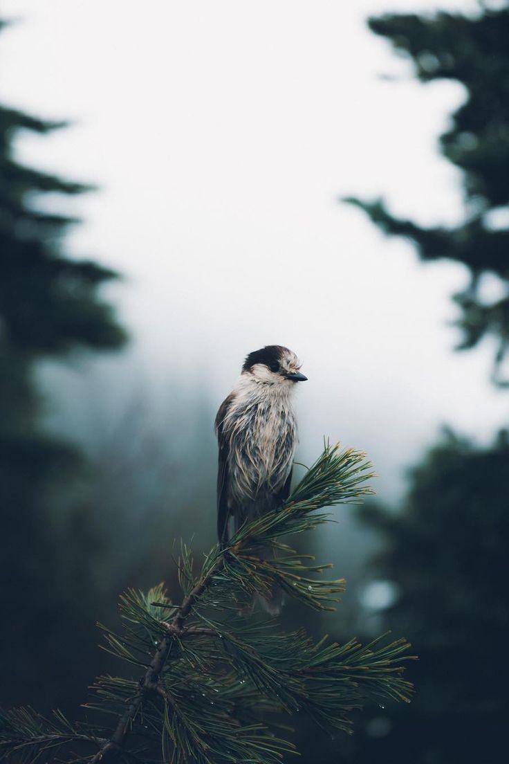 New post on bio-diversity