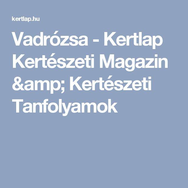 Vadrózsa - Kertlap Kertészeti Magazin & Kertészeti Tanfolyamok