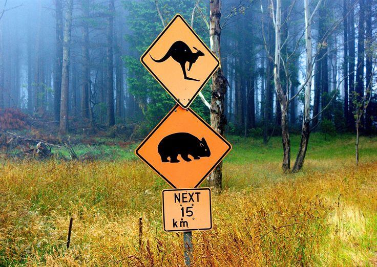 Attention à la signalisation ! Vous ne verrez ces panneaux qu'ici !