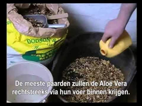 ▶ Aloe Vera en dieren - David Urch - YouTube