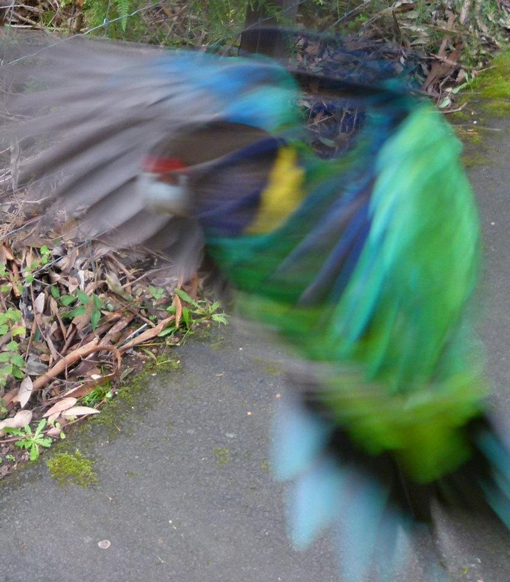 """Parrot brags """"Wow, look how fast I am.  No, don't, you can't. I'm too fast for you!"""""""