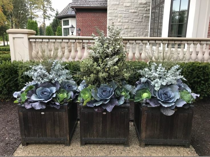 At A Glance: Recent Work | Dirt Simple - edible container garden with cabbages