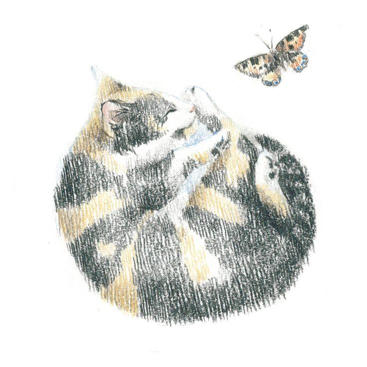 calico cat, sleep, сolour pencils, graphic, illustration, draw, трехцветная кошка, кошка спит клубочком, графика, иллюстрация, цветные карандаши