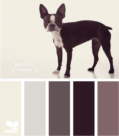 boston tones: Wall Colors, Paintings Swatch, Paintings Colors Palettes, Colors Tones, Design Seeds, Boston Tones, Colors Schemes, Boston Terriers, Complementari Paintings Colors