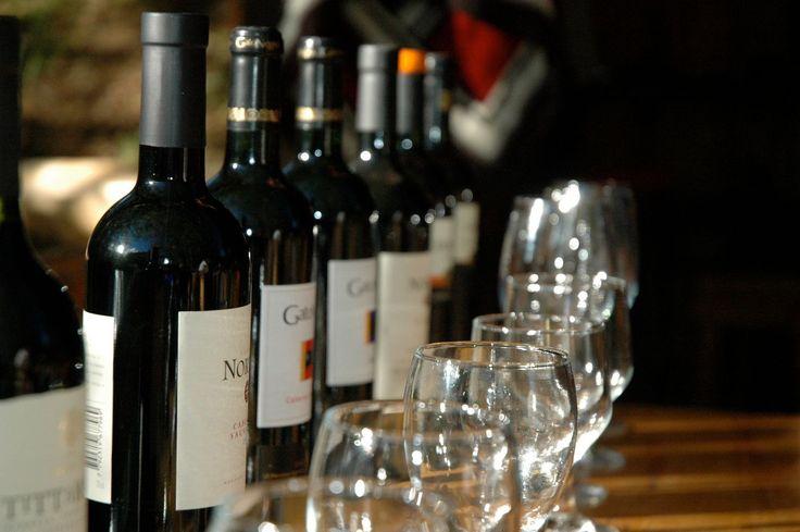 Wine tasting at Bio Bio Patagonia