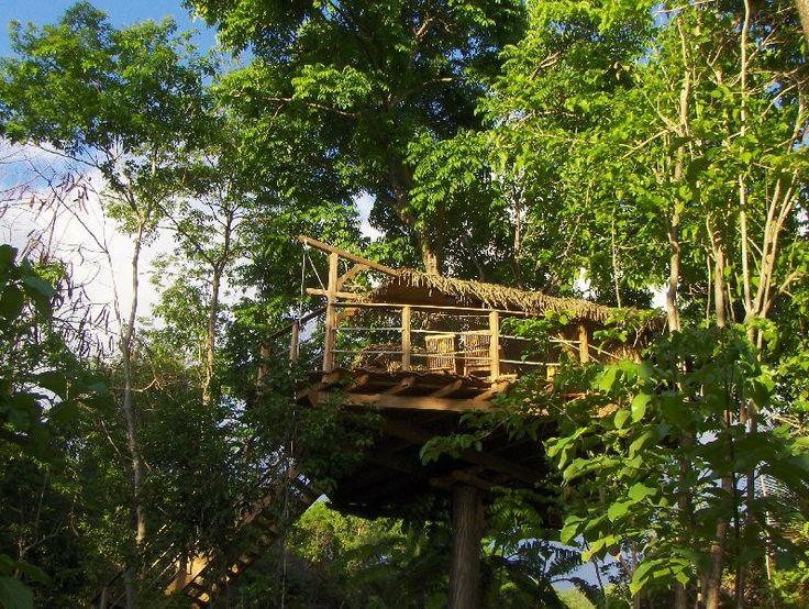 Chambre d 39 h tes guadeloupe vacances cabane arbre insolite cabanes dans les arbres - Chambre d hote en guadeloupe ...