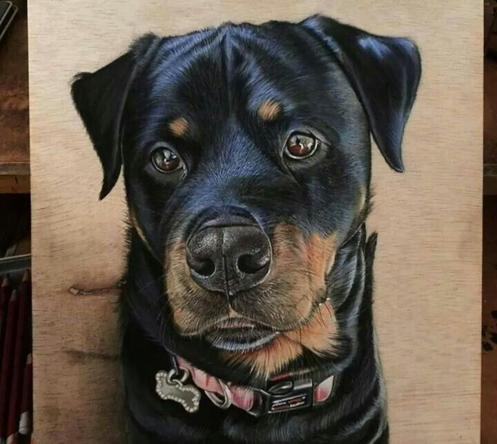 Un perro hermoso