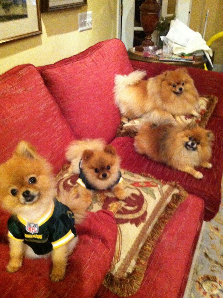 Chloe, Duke, Sasha, and Cooper.