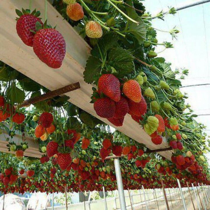 9 Best Images About Container Garden Ideas For Shoresh On
