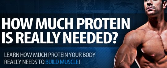 How Much Protein Do I Need To Build Muscle?