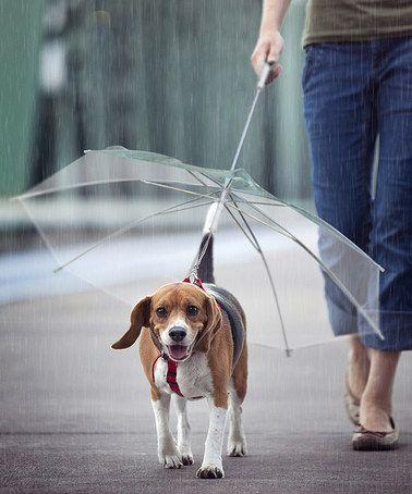 Genius! Clear Dog Umbrella to keep your dog dry #zulilyfinds