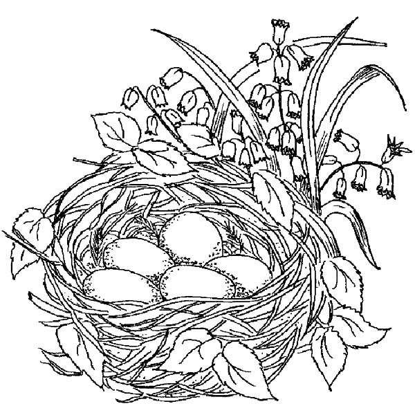It's just a photo of Delicate nest coloring pages