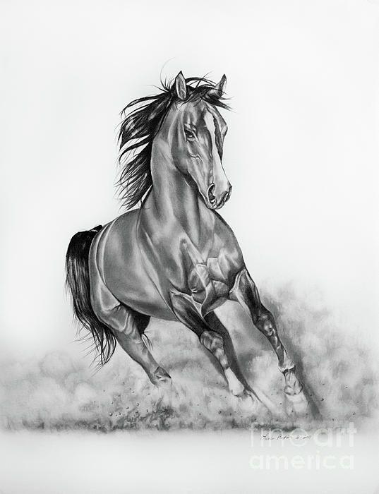 images pencil drawings of horses | Arabian Horse Pencil ...