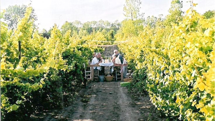 Summer picnic in the vineyard - Photo thanks to By Chadseys Vineyards & Winery  bychadseyscairns.com