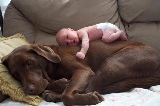 Love those chocolate labs!! Looks like my lab