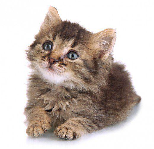Aristocats Siamese Cats Names