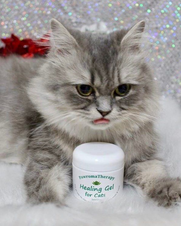 My Healing Gel For Cats Is Great For Skin Rashes Wounds Ringworm