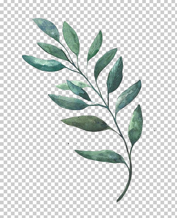 Watercolor Painting Leaf Drawing Png Autumn Leaves Blackish Blackish Green Branch Cartoon Leaf Drawing Drawings Watercolor Leaves