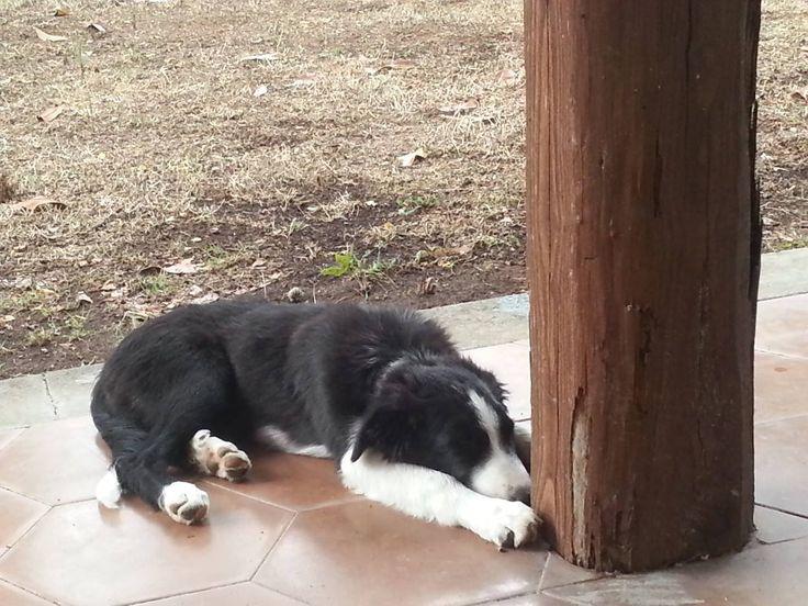 Fylgia | My Puppy Border Collie