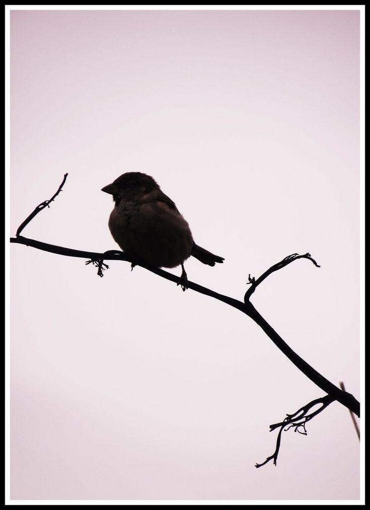 bird silhouette - Google Search