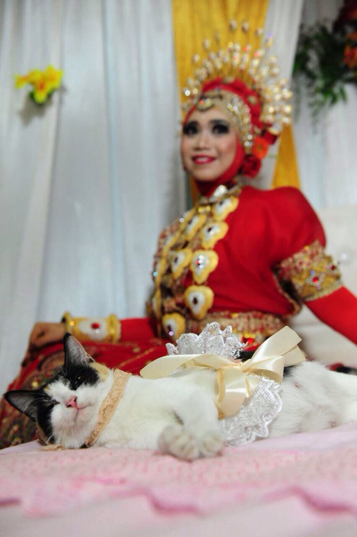 Si cantik #wedding #cat