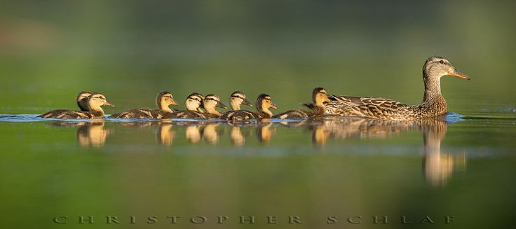 Photo ANOTHER BUSY MOM by CHRISTOPHER SCHLAF on 500px
