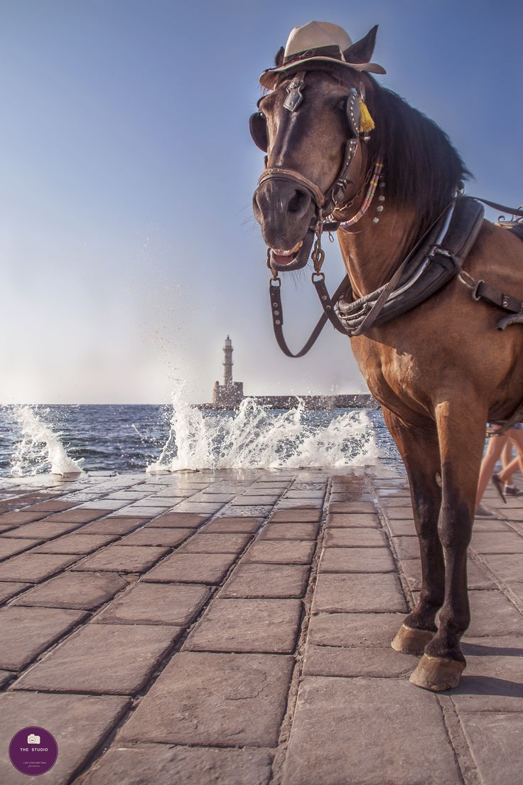 horse chania crete greece old port photography