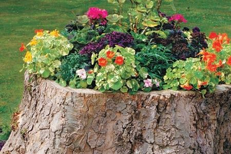 How to Create a Tree-Stump Planter flowers
