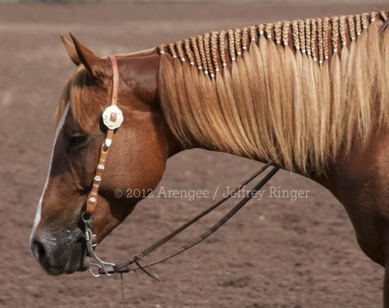 @Stacey: we should totally do this to Annie's mane next show! :D