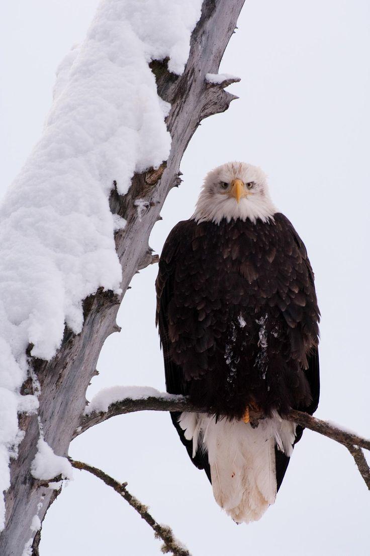 Endangered No Longer: Our Favorite Pictures of Bald Eagles