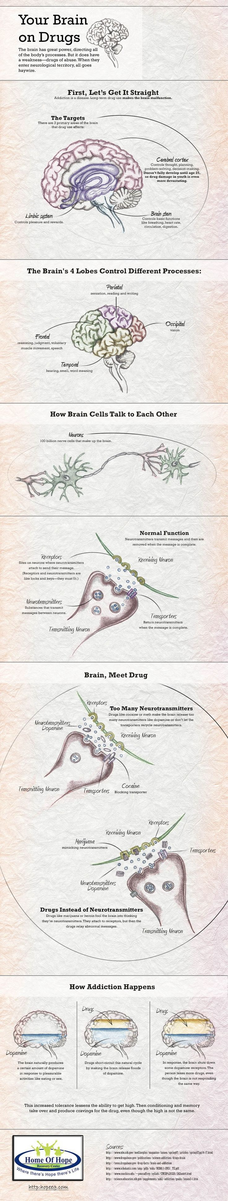 There are types of drugs, such as alcohol and heroin, have a dampening effect. There are other stimulant drugs Kalokayen, The third category, which includes cannabis and its derivatives (marijuana and hashish), they are hallucinogens that lead people to be modified to recognize what is going on around them. http://hopeeg.com/how-drugs-affect-the-brain
