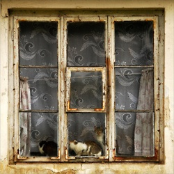 Old window: Soul Windows, Squares, Old Windows, Wonderful Windows, By, Cats Кошки В Окошках, French Windows