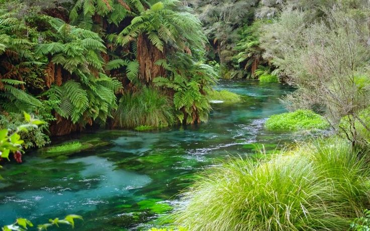 Fairy tale river - Te Waihou, New Zealand. The walk to the springs follows a track alongside the river, through a picturesque and rural land. This one and all images below, courtesy of Jude.