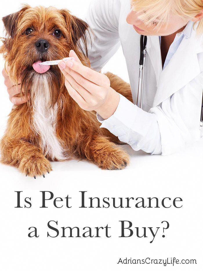 Is Pet Insurance A Smart Buy Adrian S Crazy Life In 2020 Pet Insurance Dog Insurance Cheap Pet Insurance