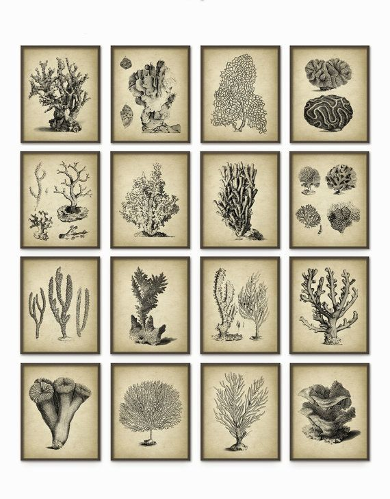 vintage coral wall art set of 16 marine wall art posters coral nautical print marine biology wall art ab409