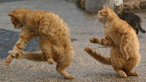 Let's Dance!: Funny Kitty, Funny Pics, Funny Animal Pictures, Funny Humor, Funny Cat, Funny Friday, Funny Photo, Happy Weekend, Animal Funny