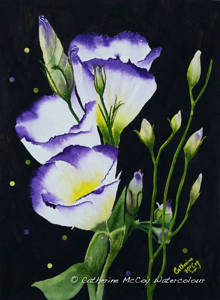 "Lisianthus Fantasia. Watercolour 12"" x 16"" by Catherine McCoy"