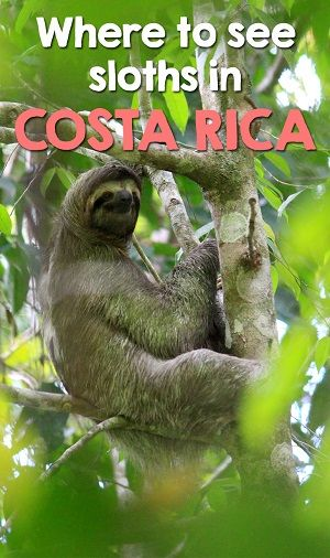 where to see sloths in costa rica - our informative guide on the best places to see sloths in Costa Rica including recommended sanctuaries and national parks