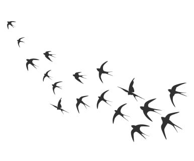 Wandtattoo Birds