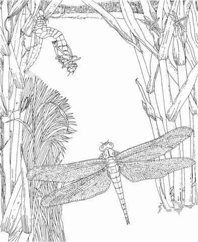 moorland coloring pages - photo#16