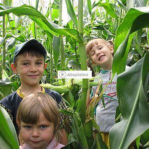 """Maislabyrinth beim Erlebnisbauernhof Gut Hügle! Nicht nur für die Kleinen ein Spaß, sondern auch für große """"Kinder"""" wirklich witzig und einen Ausflug wert. Feste Schuhe sind zu empfehlen! http://www.guthuegle.de/Maislabyrinth-Bodensee-Ravensburg.13.0.html"""