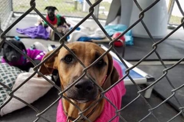 Please Share Humane Society Of Pasco County Fl Needs Your Help Hspc Is A Volunteer Based Animal Shelter That Has Been Animals Dog Parents Humane Society