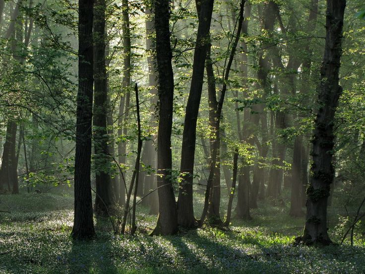 Foreste nel Parco del Ticino (Foto di D.Furlanetto)
