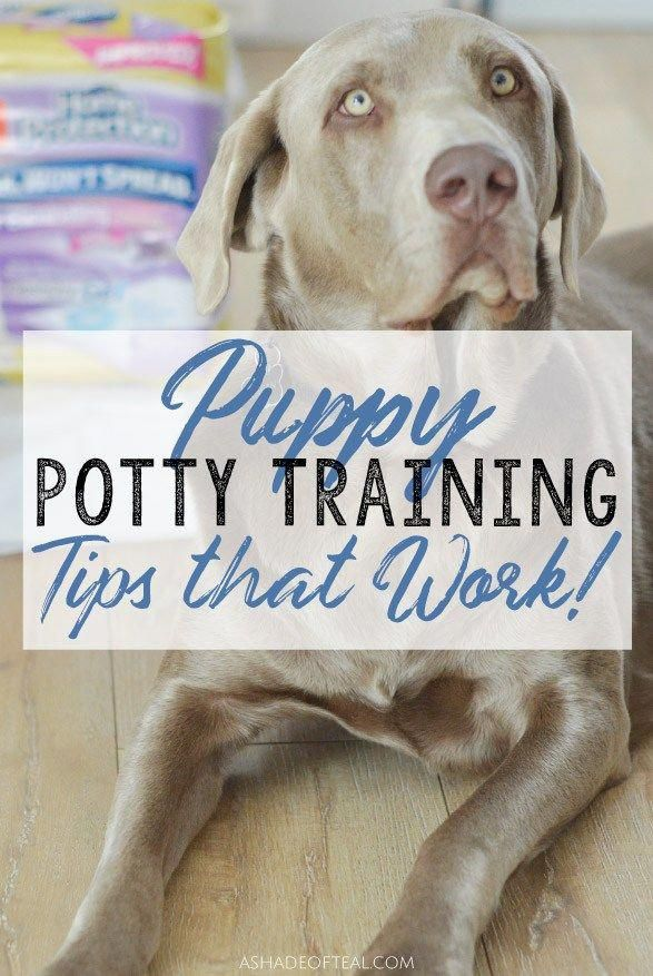 Potty Training A Puppy Doesn T Have To Be Hard Go Check Out These