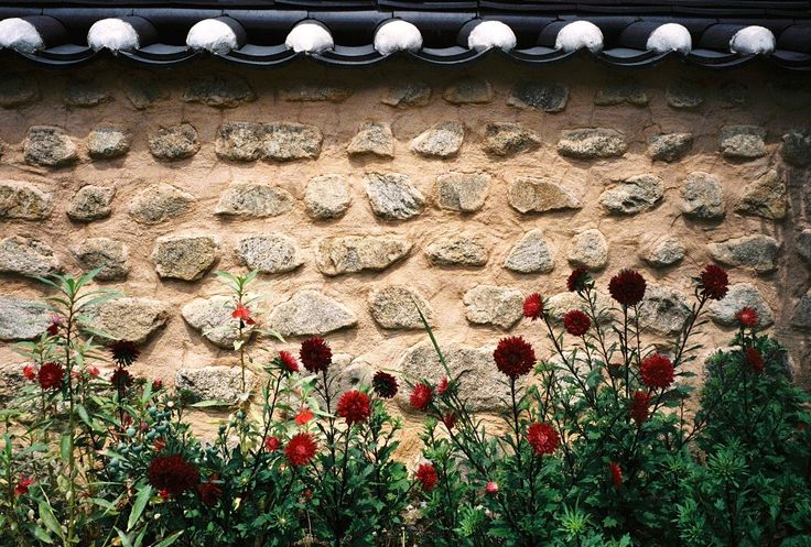 https://flic.kr/p/oM2FAe | flowers against the wall | Jeonju, South Korea, Fuji Klasse W, Fuji Superia Venus 800