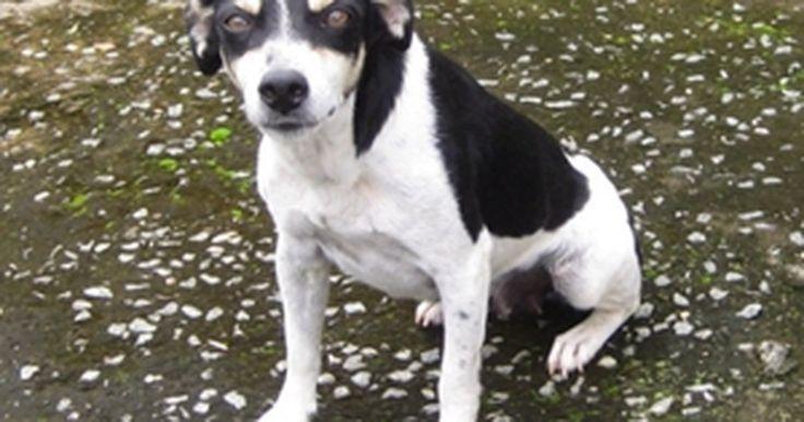 Feira promove adoção de cães e gatos da Zoonoses de Sorocaba