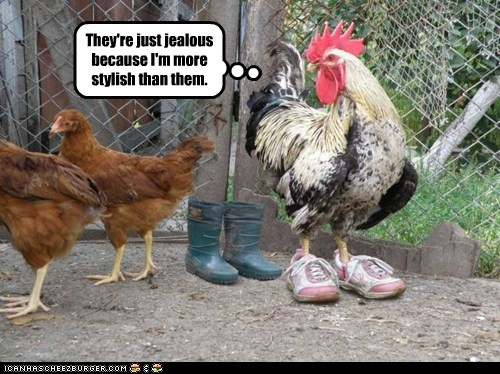 Funny Chicken: 17 Best Images About Chickens On Pinterest