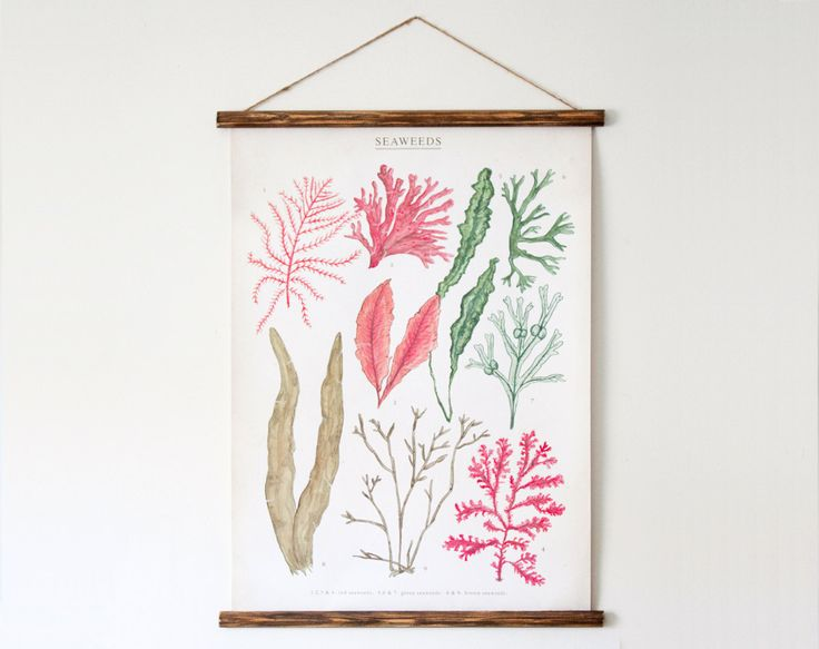 Seaweeds canvas poster via @Megan Gilger
