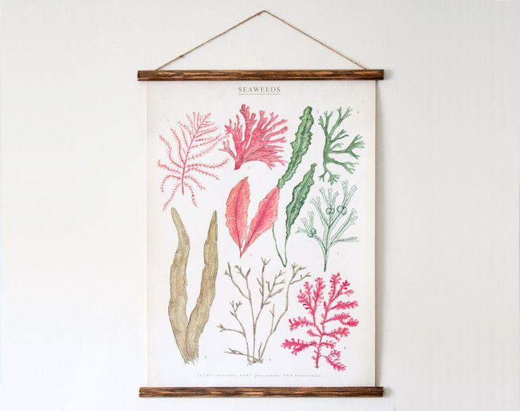 Seaweeds canvas poster - vintage educational chart illustration ALP2002. $70.00, via Etsy.